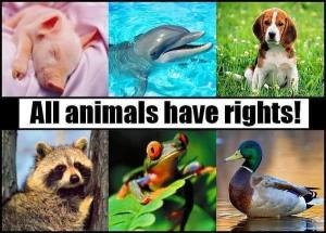 Animal-Rights-animal-rights-13295974-600-431